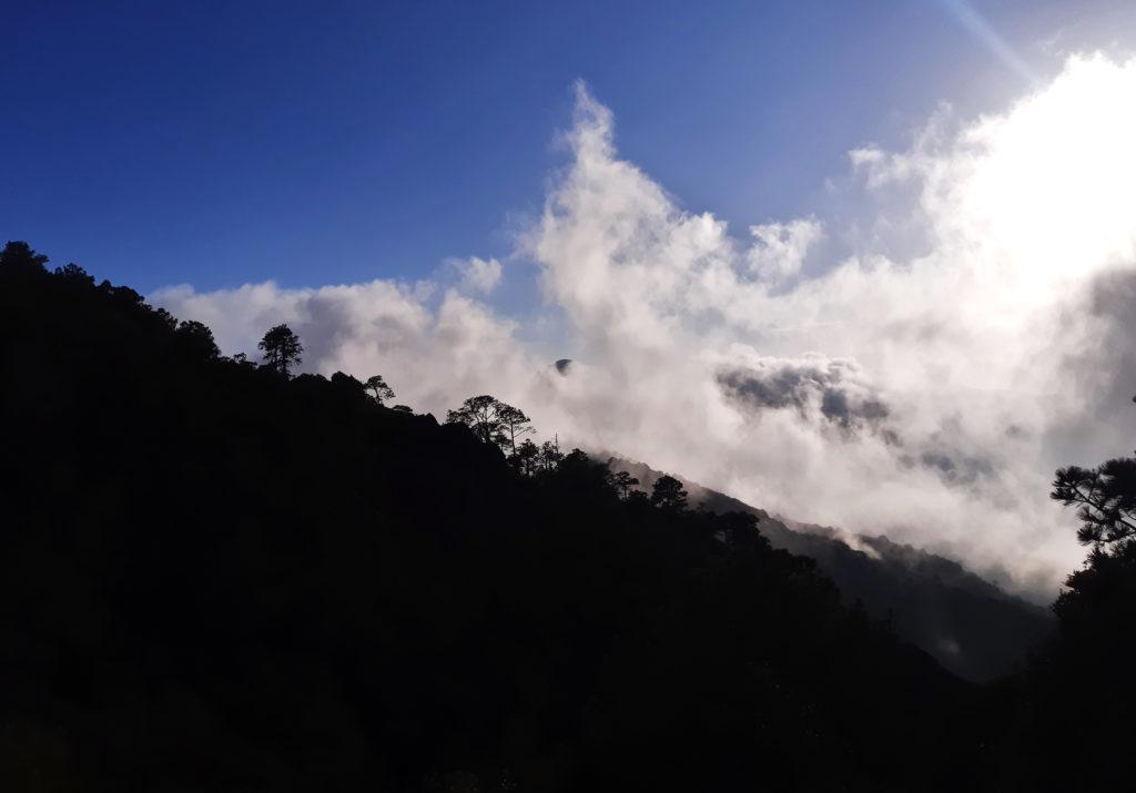 Niebla vaca